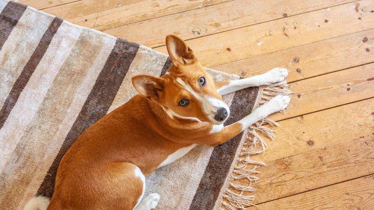 犬を自由にさせすぎると起こる危険なこと3選