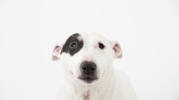 愛犬が耳を倒してしっぽを振っている時の心理とは?