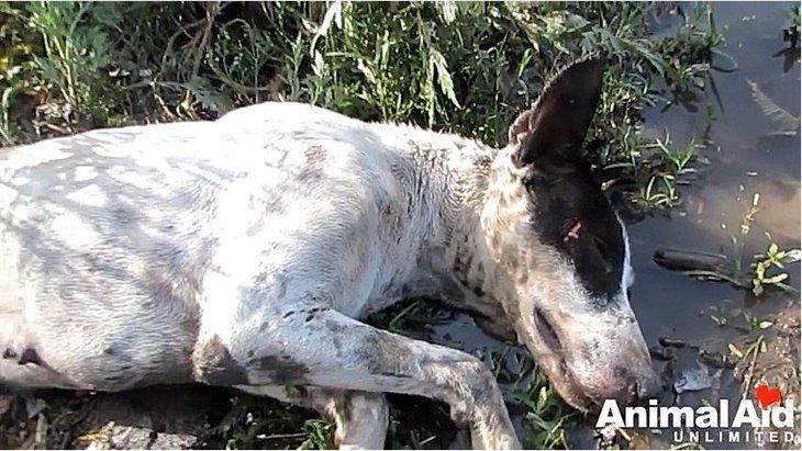 草原で意識を失った犬、発見されて見違える姿に!