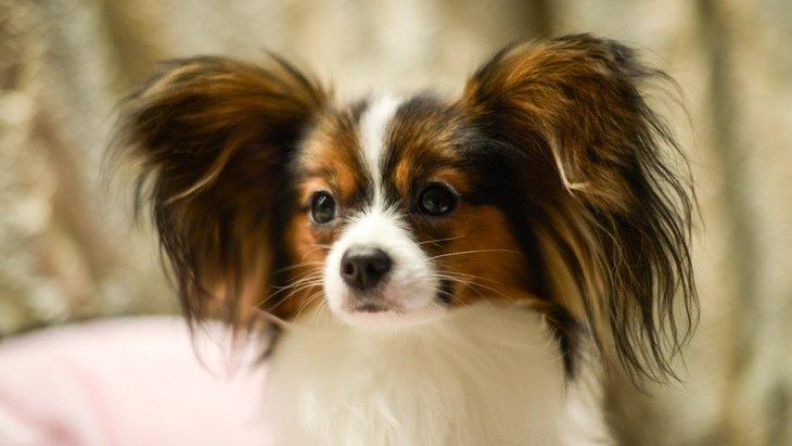 犬にしか聞こえない「音」があるって本当?