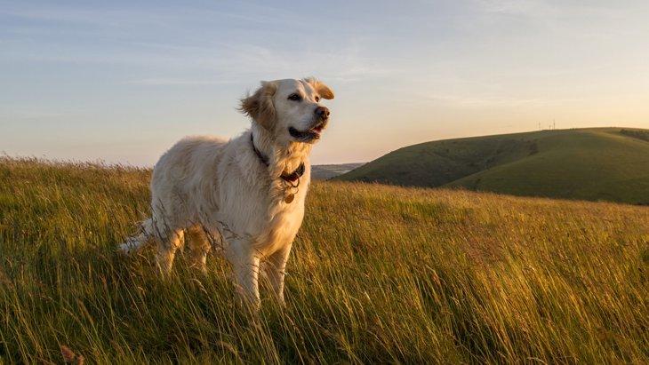 愛犬を初盆にお迎えする方法