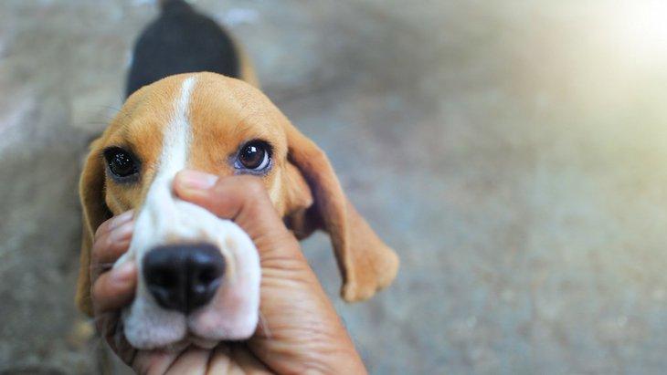 犬への罰としてやってはいけないNG行為4選