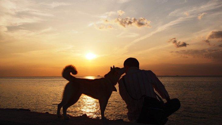 犬にとっての『幸せ』とは?愛犬のために飼い主がやるべきこと