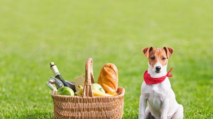 犬とのピクニックにオススメな都内のスポット5つ