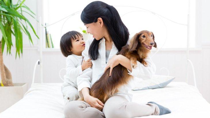 犬に使える『赤ちゃん用品』5選!意外な方法で使う活用方法を解説