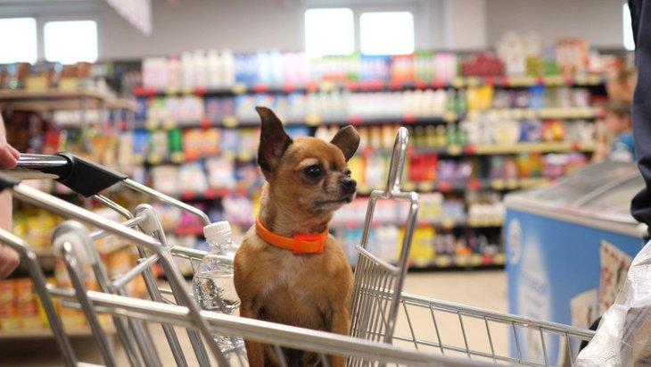 『犬OKのショッピングモール』で飼い主が必ず守るべき3つのこと