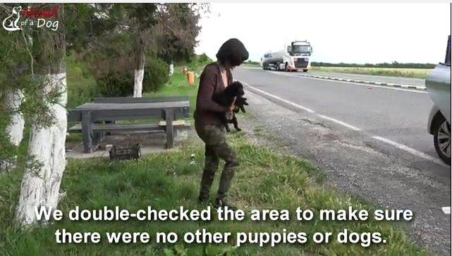 交通量の多い道路に遺棄された3匹の子犬