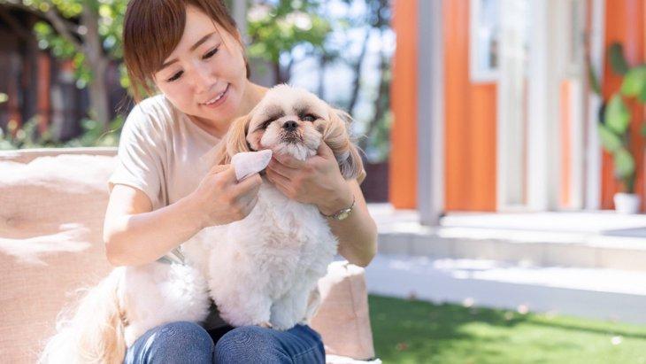 愛犬の歯が抜けてしまった!適切な3つの対処法とNG行為を解説