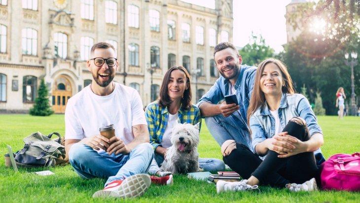 犬を撫でるセッションが大学生の学習能力に良い影響【研究結果】
