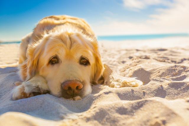 老犬にやりたい夏の暑さ対策5選