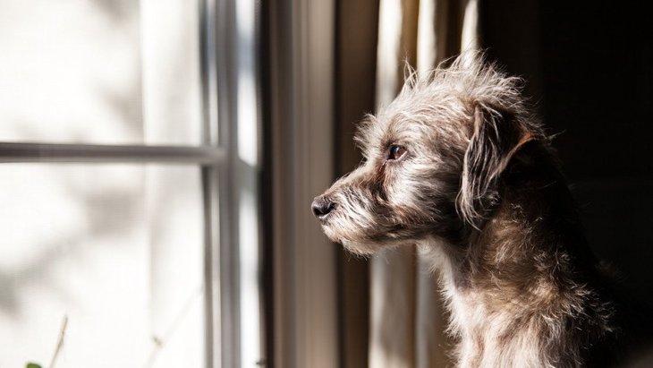『神経質な犬』の特徴4選