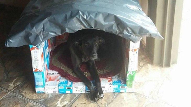 野良犬の為の牛乳パックで作る「犬小屋プロジェクト」が話題に!