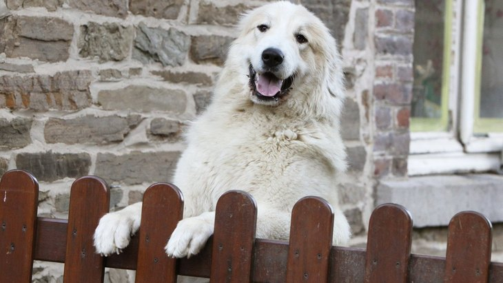 犬が迷子になってしまう理由6選 必ずやるべき対策や常に意識すべきこと