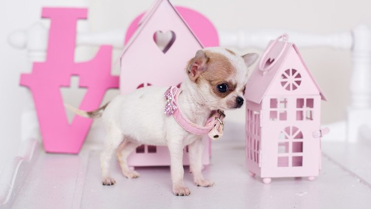 犬用のネックレスのおすすめ9選!アクセサリー付き犬用ネックレスや迷子札付きのものなど