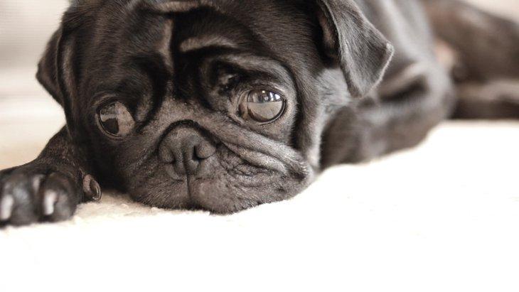 犬の皮膚の色が変わる原因とやりたい対処法