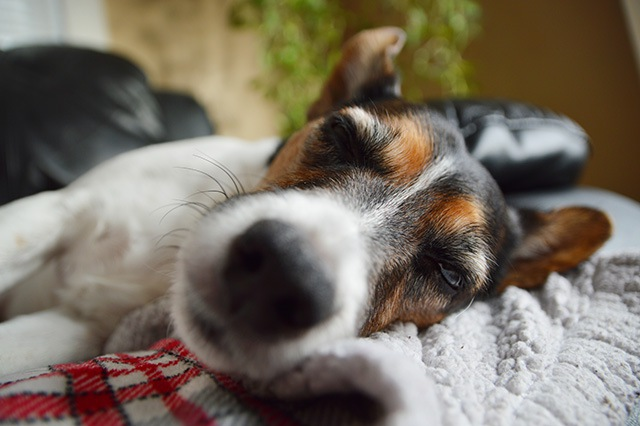 突然の血便…愛犬のコクシジウム症闘病記