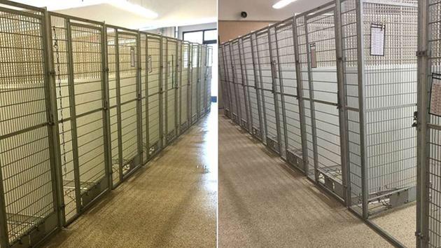 動物保護施設で起きた奇跡!保護数100匹から0匹へ(まとめ)