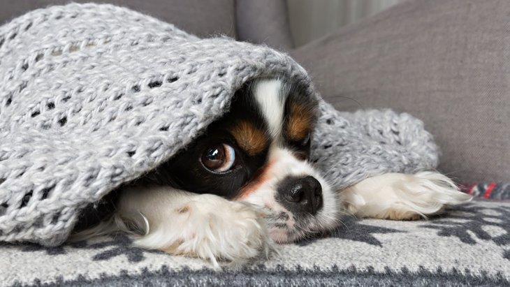 シャイな犬がよくする4つの仕草や行動