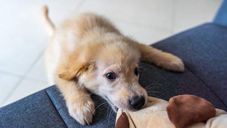 犬が嫉妬しやすい対象5選!ぬいぐるみや赤ちゃんにも嫉妬するって本当?