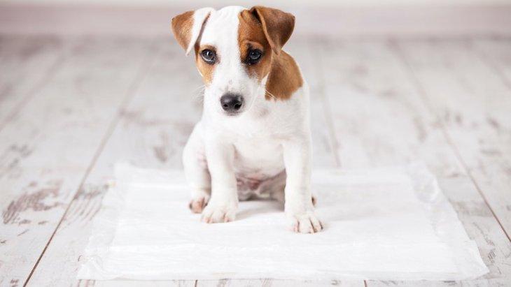 子犬と成犬のしつけ方の違い3つ