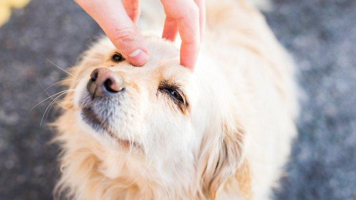 犬の寿命を延ばす?愛情込めたスキンシップが犬の健康と心を守る