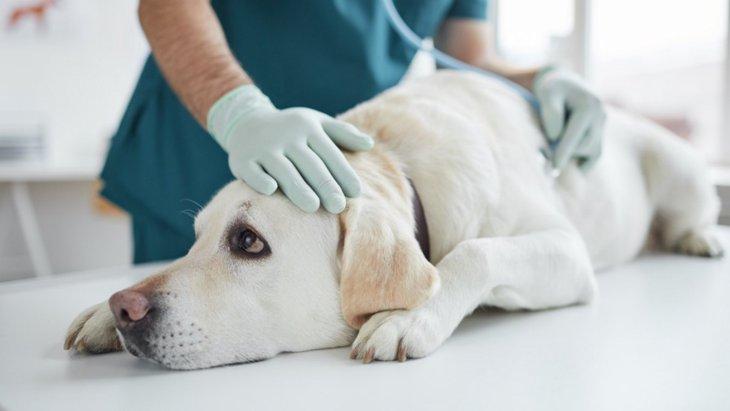 犬がしていたら超危険な『嘔吐・下痢』の症状5選!こんな状態だったら今すぐ病院へ…!