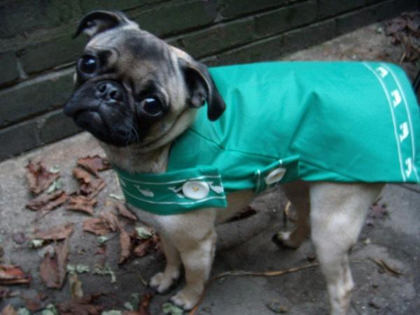 犬とのお散歩で便利なおすすめグッズ!袋ごと流せるトイレ袋とレインコート