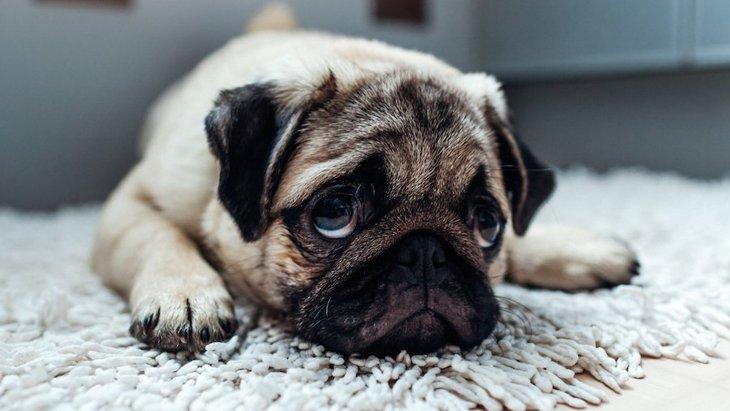 犬が悲しい目をしている時の心理4つ