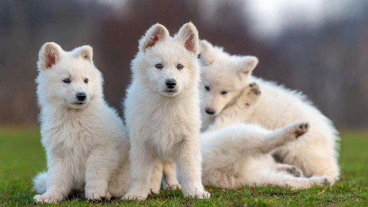 犬が可愛い5つの理由とは?実は、科学的にも証明されていた!