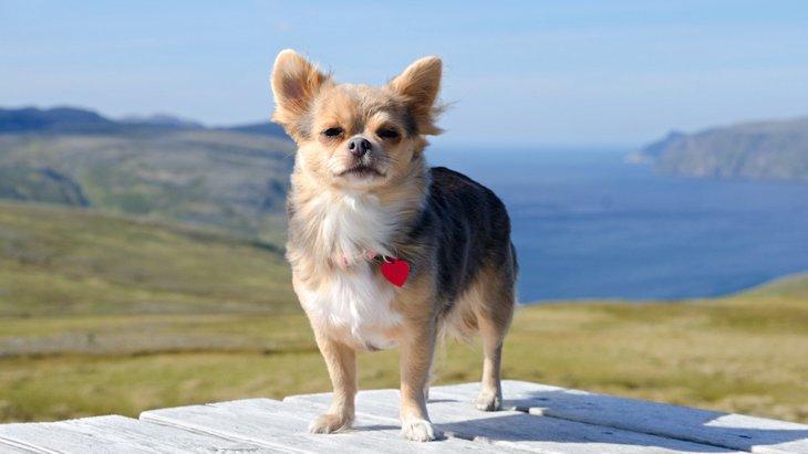 年をとって視力や聴力を失った犬のためにできる7つのこと