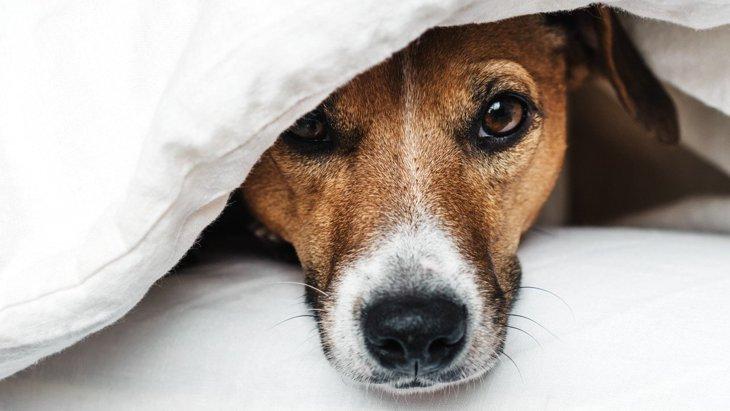 犬が『パニックに陥っている』時の症状4選!落ち着かせるためにやるべきこととは?