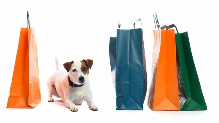犬を飼う予定の人必見!買ってよかった犬用品・いらなかった犬用品
