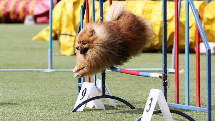 うちの子をスターにしたい!犬の大会・コンテストの種類