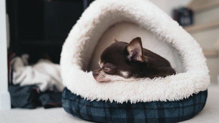 うとうと…♡犬が『眠い時』によくする表情や仕草5選