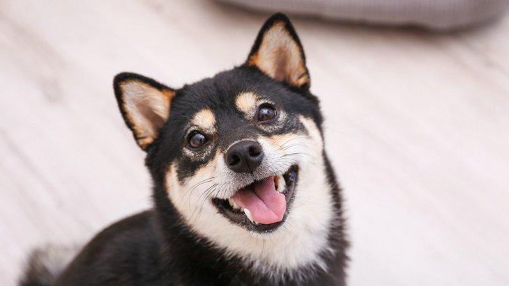 犬がしっぽを大きく振り回す時の心理4選