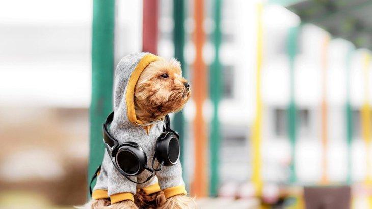 秋は犬にどんな服を着せればいい?