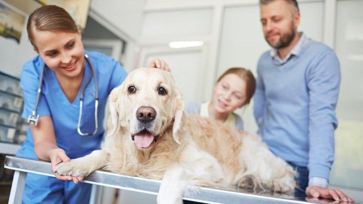 犬の治療費の目安一覧
