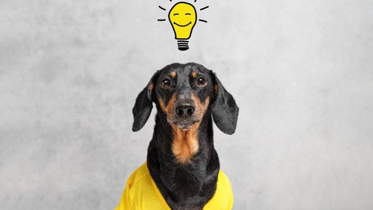 頭良すぎ!犬がよくしている『賢い行動』3選
