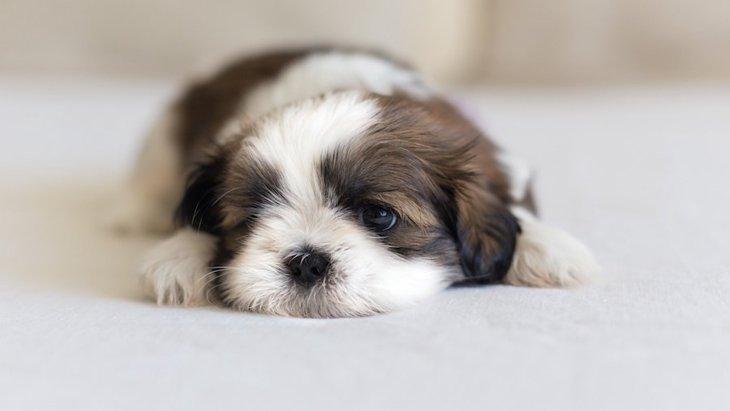 運動量が少ない犬種6選