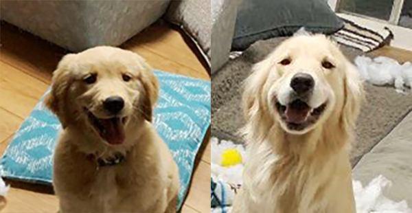 犬の親子によるイタズラ後のドヤ顔。こんなの叱れないよ…と話題