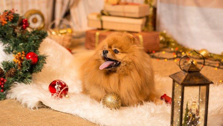 犬のイタズラからクリスマスツリーを守るアイデア5選