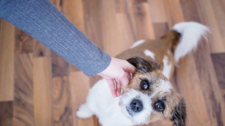 犬がソワソワしている時の心理5つ