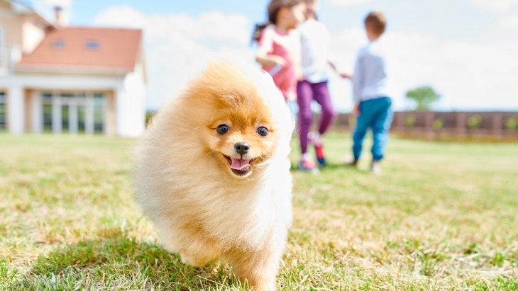 犬を飼っている家庭のご近所付き合いのポイント4つ