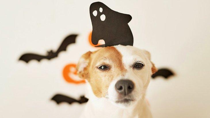 犬には幽霊が見えてるって本当?どんな行動をとるの?