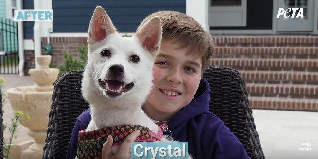愛護団体PETAが救助した9匹の犬のビフォー・アフターに感動!