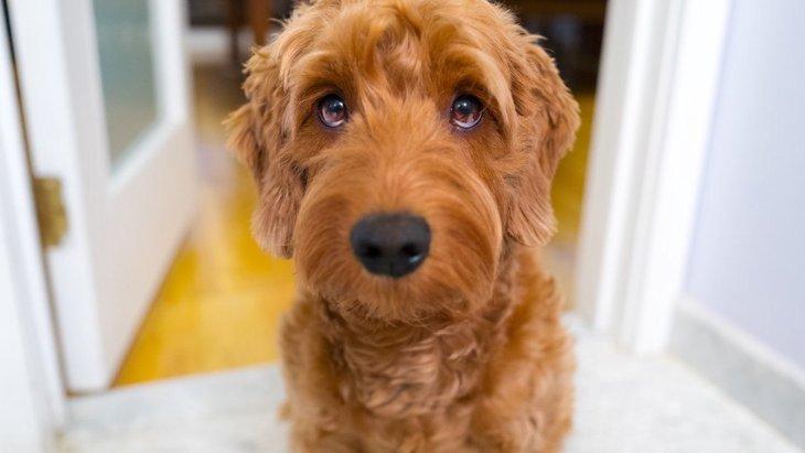 犬が『おしっこ』をする前によく見せる仕草5つ