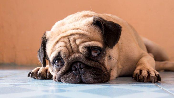 犬もかかる『精神病』4選 病院へ行くべき症状や接し方を解説