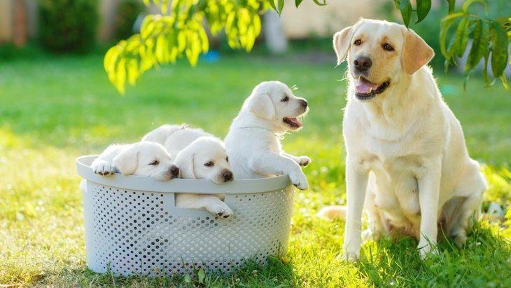 『育犬ノイローゼ』に陥った飼い主さんに伝えたいひとつのこと