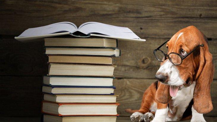 犬の飼い主は知っておきたい!犬に関する法律5つ