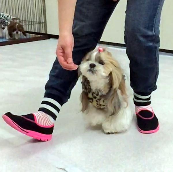 ドッグダンスで愛犬と飼い主のストレス発散!